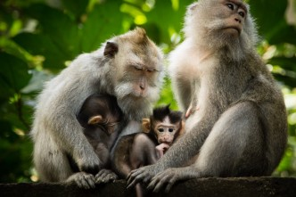 Monkey-forest-in-Ubud-Gianyar-Bali-Indonesia-Bali-Hello-Travel3